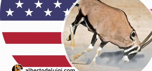 bitfinex vs america